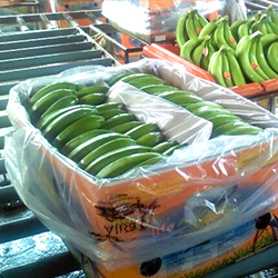 shipping-Fresh-Cavendish-Banana